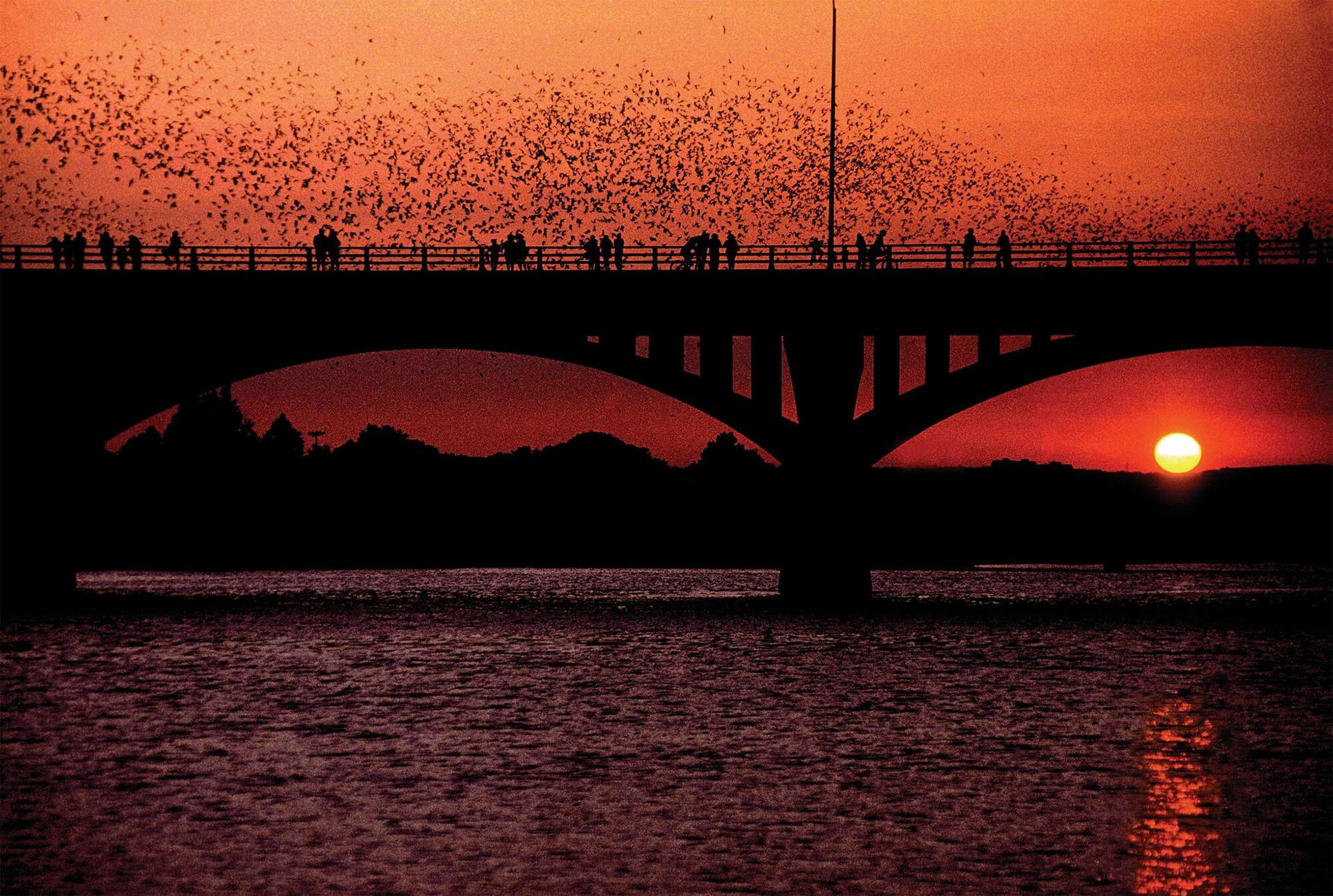 Bat Watching in Austin